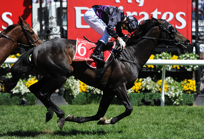 Cup-the winning horse Fiorente
