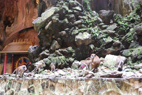 Batu Cave Monekys